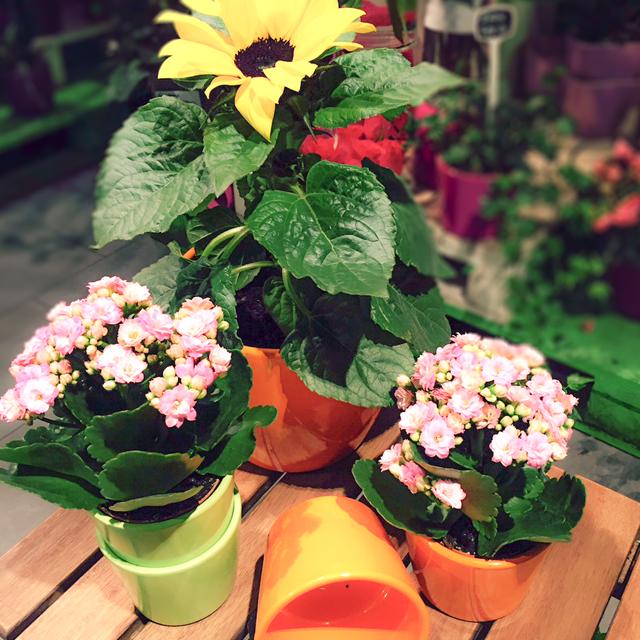 GroBartig Topfpflanzen